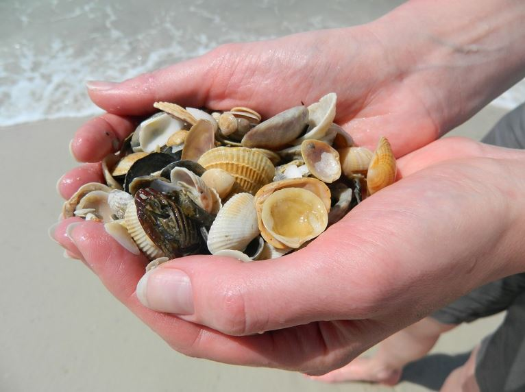 Hand full of seashells